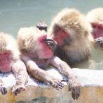 函館・湯の川温泉のおすすめの温泉宿・歴史・観光のモデルコース