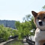 ペット可能な温泉宿