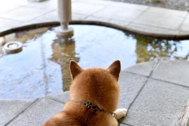 ペットと泊まれる温泉宿