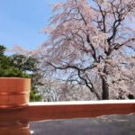 温泉花見旅行が楽しめるおすすめ温泉旅館10選